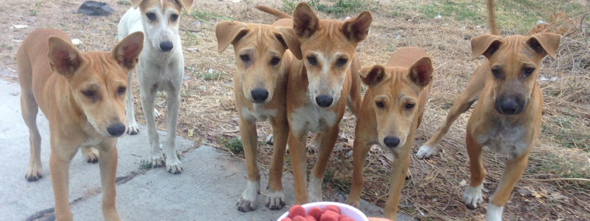 Soi Dog Angels